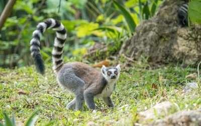Cebu Safari assures animals are safe for the coming El Niño